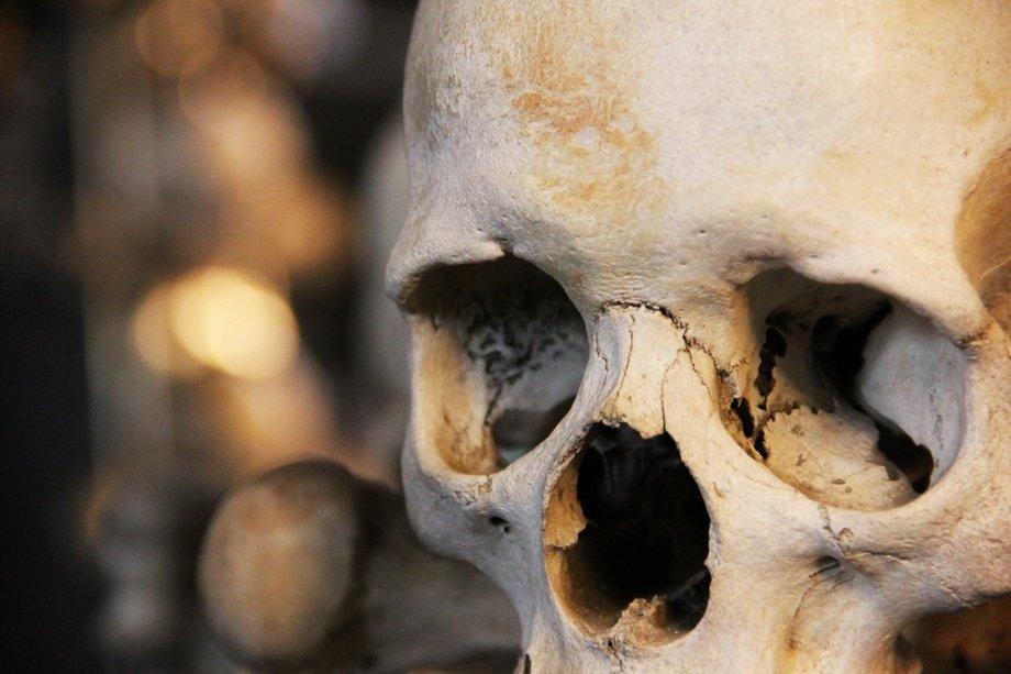 Human Skull M