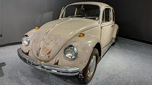 Beetle Graphic 300 x 169