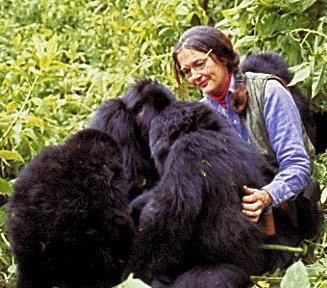 gorillas in the mist in critic essay Immediately download the gorillas in the mist summary, chapter-by-chapter analysis, book notes, essays, quotes, character descriptions, lesson plans, and more.